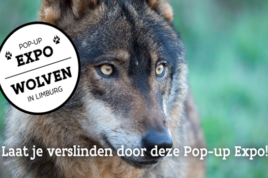 Laat je verslinden door de pop-up expo